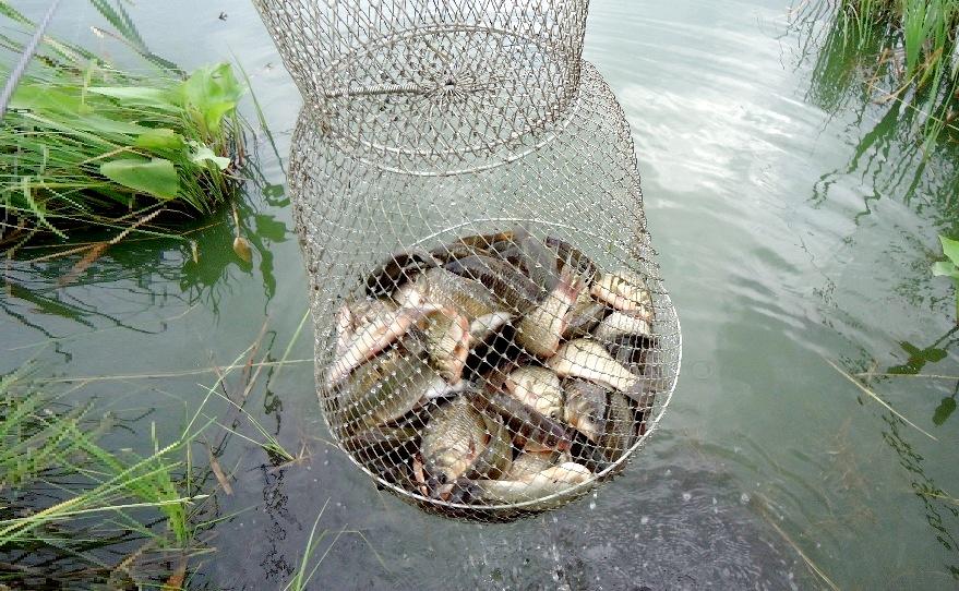 значимыми фото рыба в садке всего, это процесс